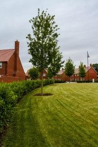 Crest Nicholson Tadpole Garden Village