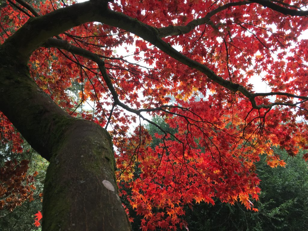 Red leaves on tree