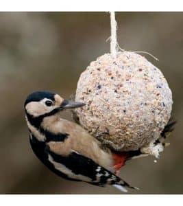 Bird eating from home made bird feeder