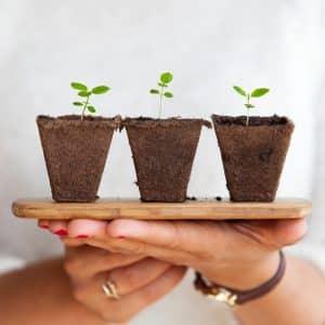 3 plants on a wooden board