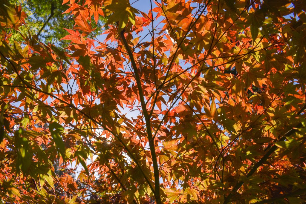 orange and brown leaves on tree