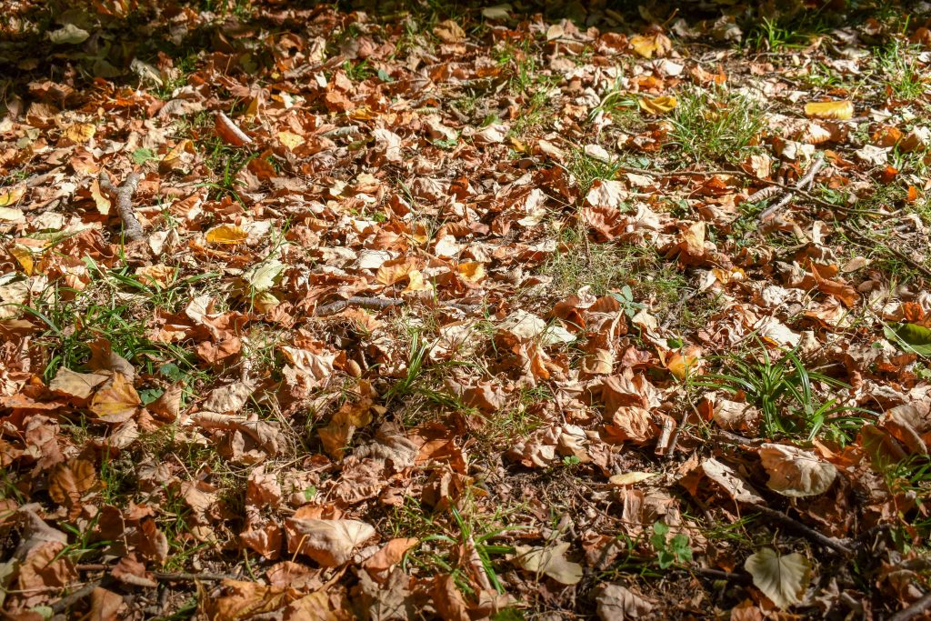brown leaves on floor